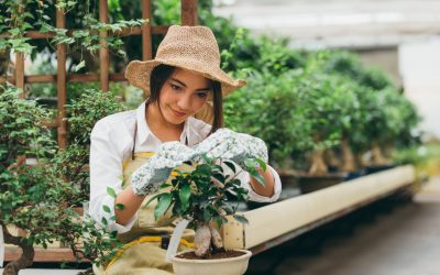 Top gardening tips for a green thumb amateur