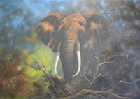Dane Willers south african artist oil paintings